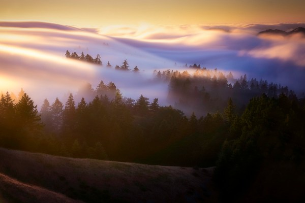 4 Tips for Photographing Fog to Create Mystical Images