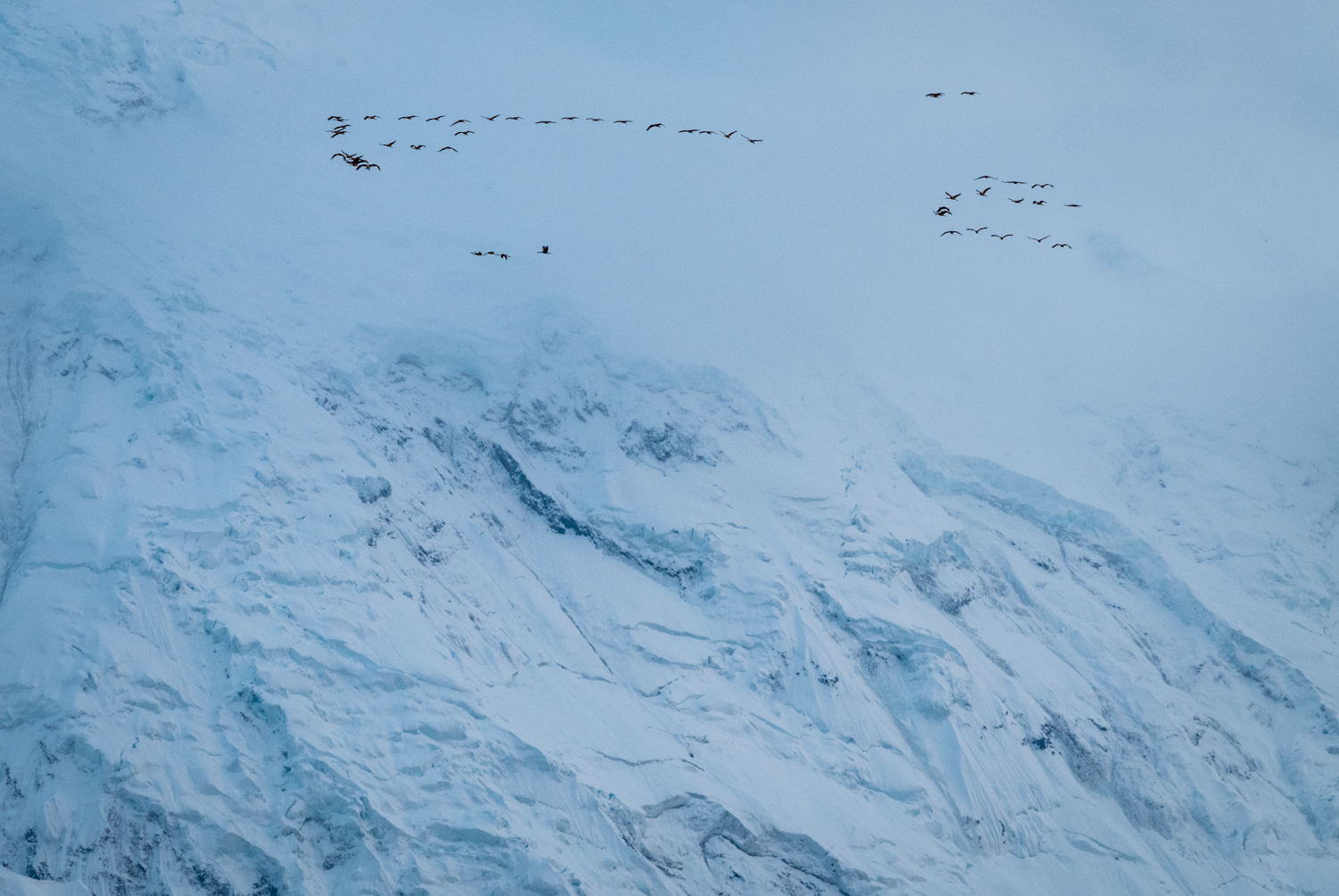 Review of the Olympus 300mm F4 PRO Lens - birds in flight and snowy mountain