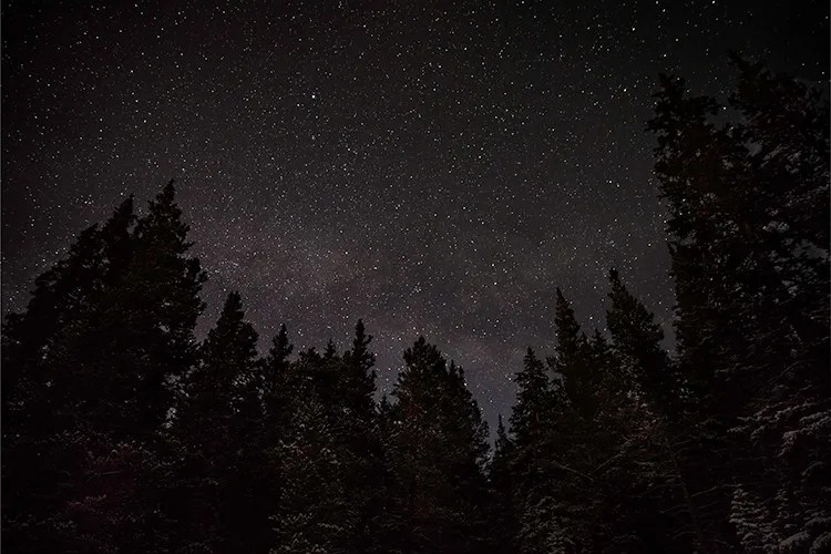 trees and stars - night sky photography