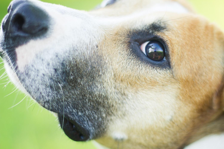 dog eye - Creative Pet Photography