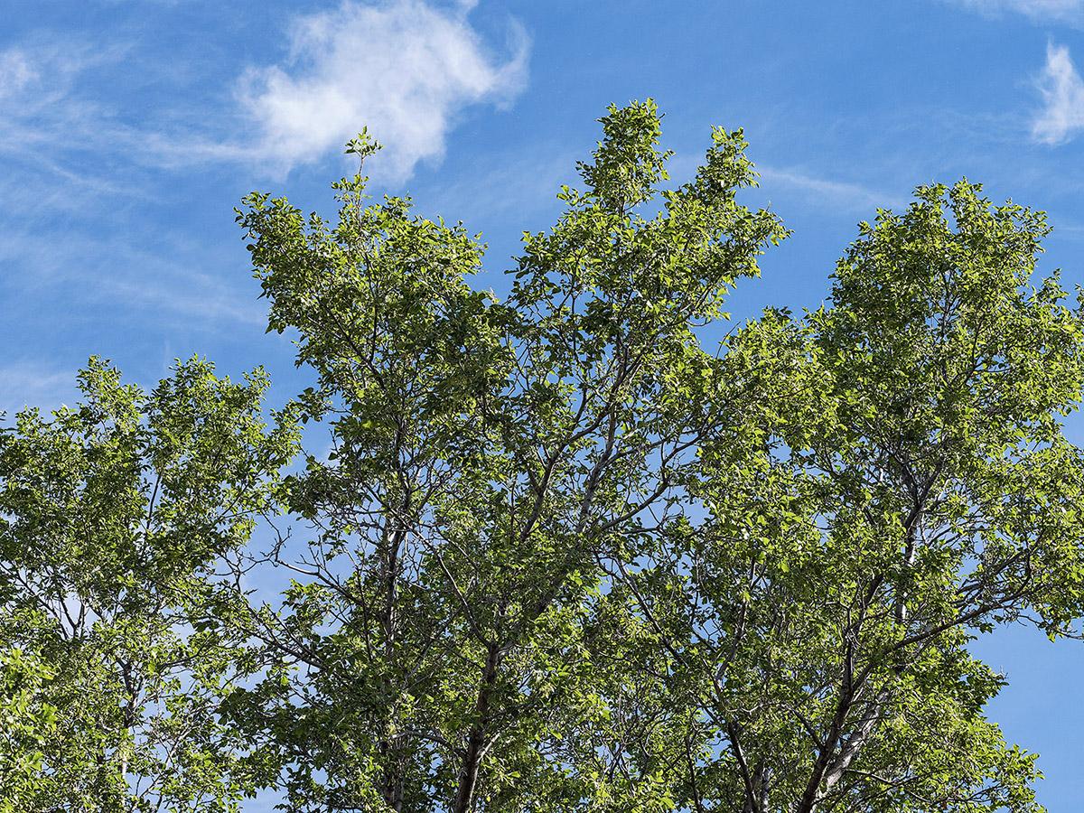 trees - Sensor-Shift Technology