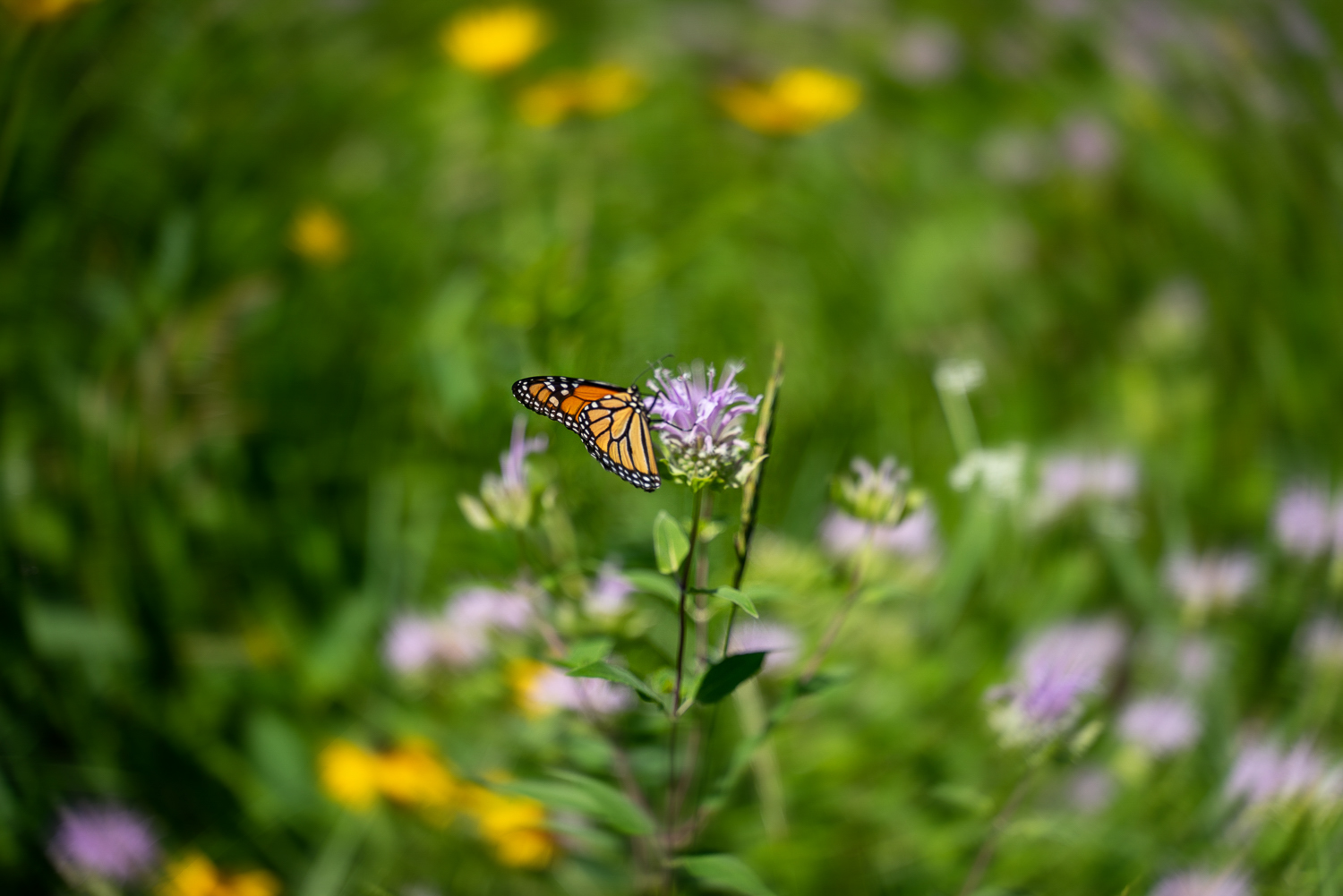final image butterfly and flowers - How to simulate a Swirly Bokeh in Photoshop
