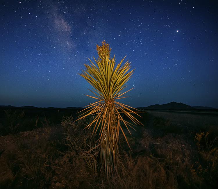 tree at night - night sky photography