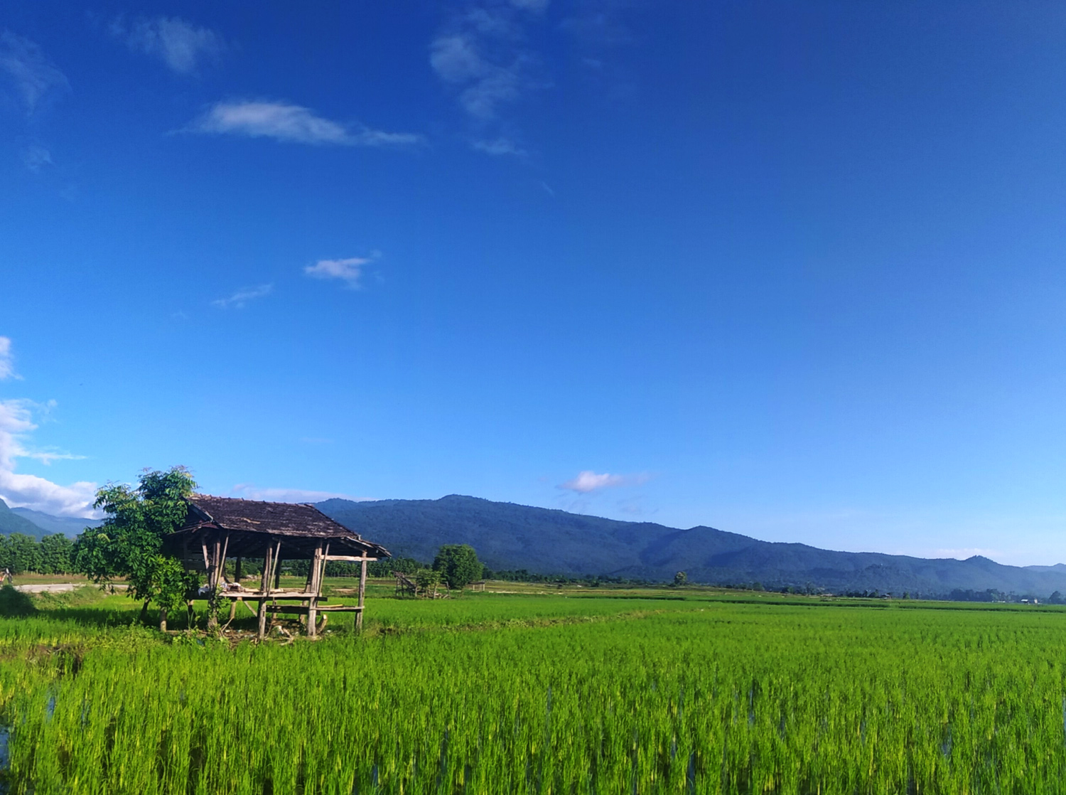 Thai rice landscape - comfort zone