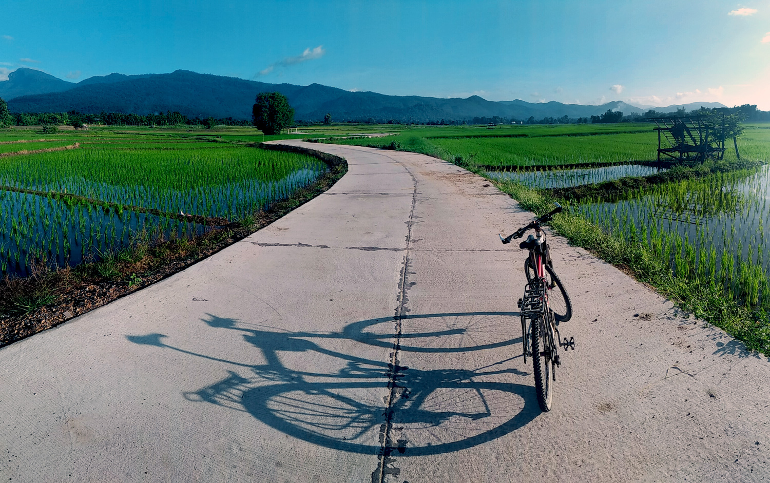 Bicycle on a road in the rice field - comfort zone