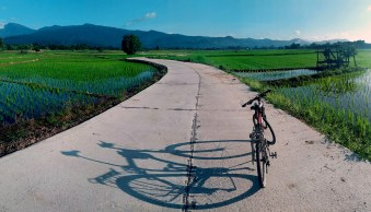 Bicycle on a road in the rice fields © Kevin Landwer-Johan