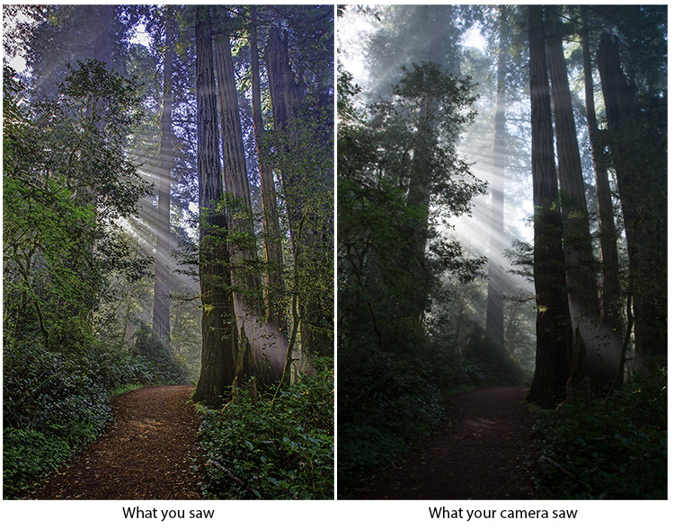 Making the Best Use of HDR in Landscape Photography - two images of a forest