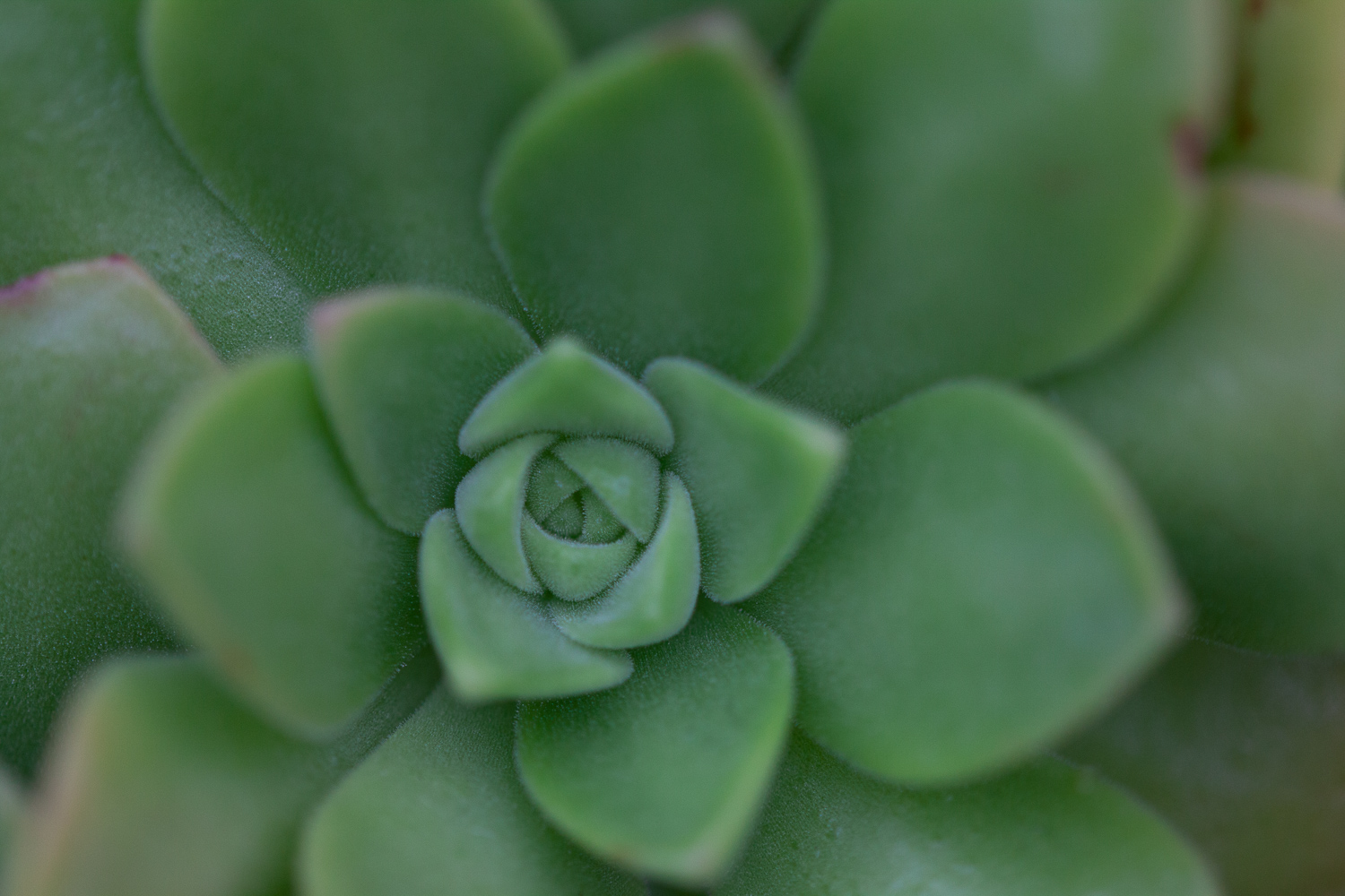 succulent plant - 5 Ways to Make Extraordinary Photographs of Ordinary Subjects
