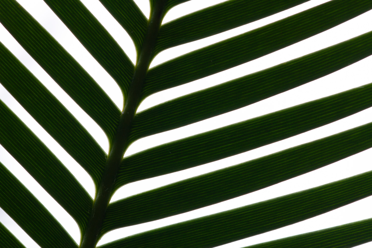 palm leaf backlighting - 5 Ways to Make Extraordinary Photographs of Ordinary Subjects