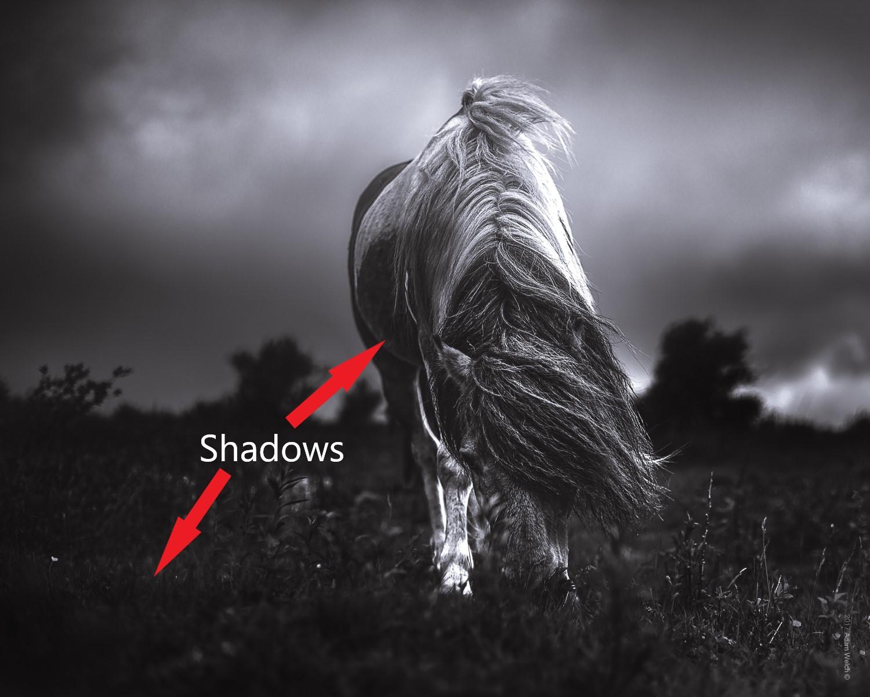 Understanding Tonal Range in Photography 6