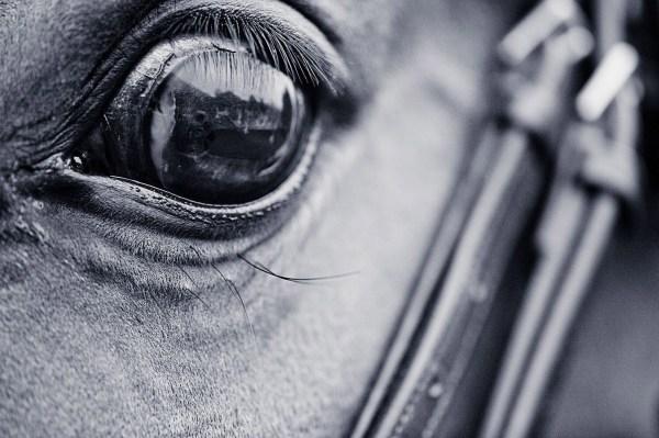 Focus on Autofocus – Achieving Sharp Images Every Time