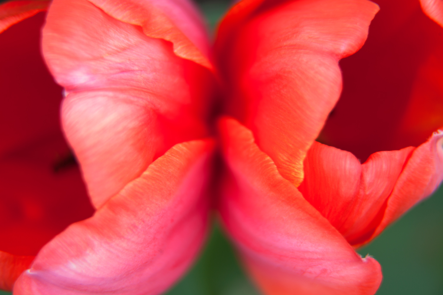 7 - 5 Tips for Photographing Flowers with Impact