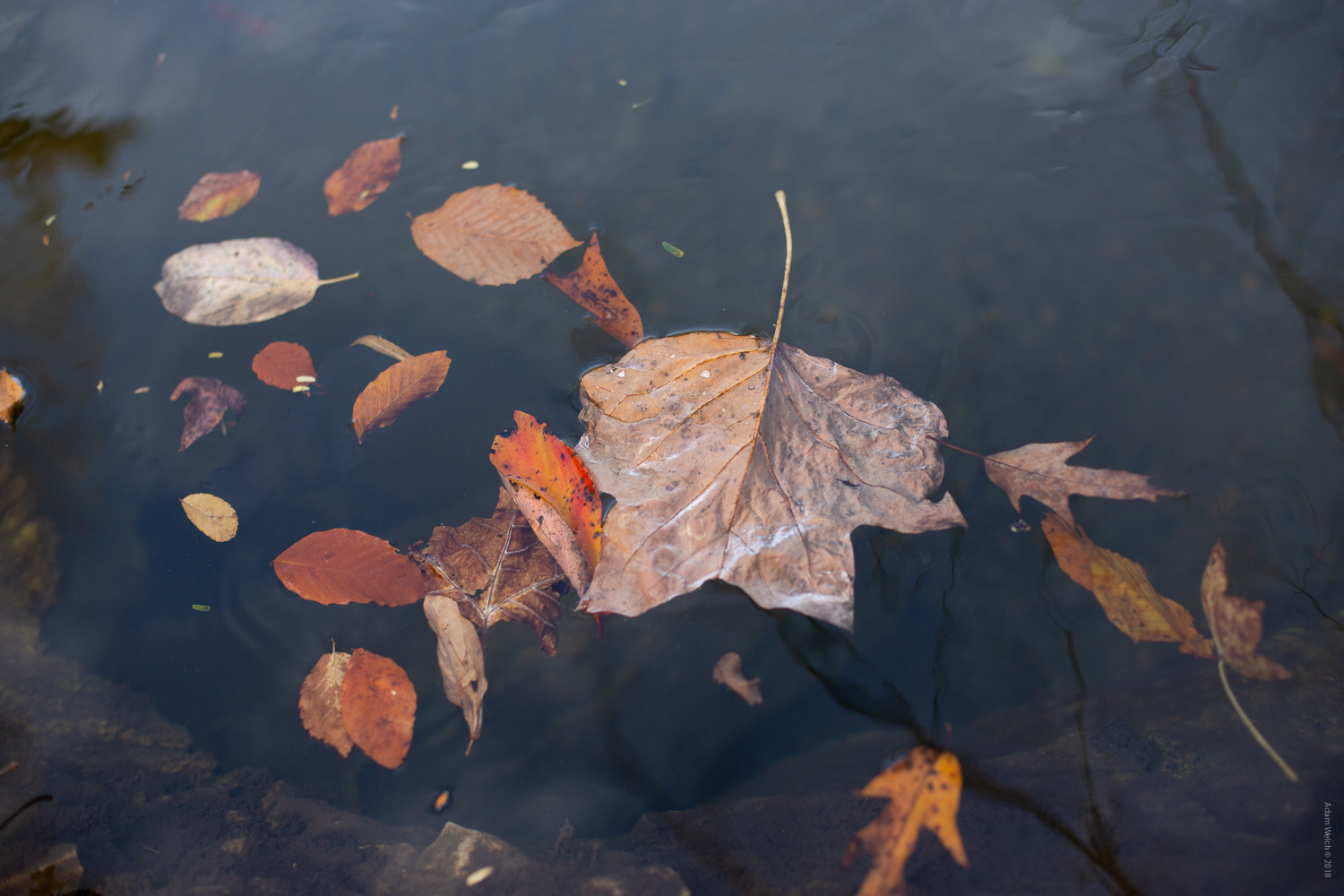 Floating leaves - 4 Tips for Capturing Autumn Colors