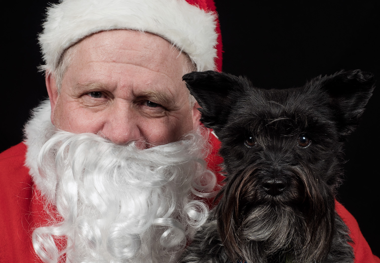Image: Santa's little helper