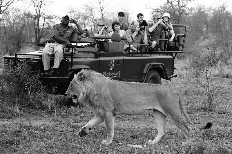 Image: A typical Southern Africa safari vehicle. Image courtesy of Motswari Private Game Reserve, So...