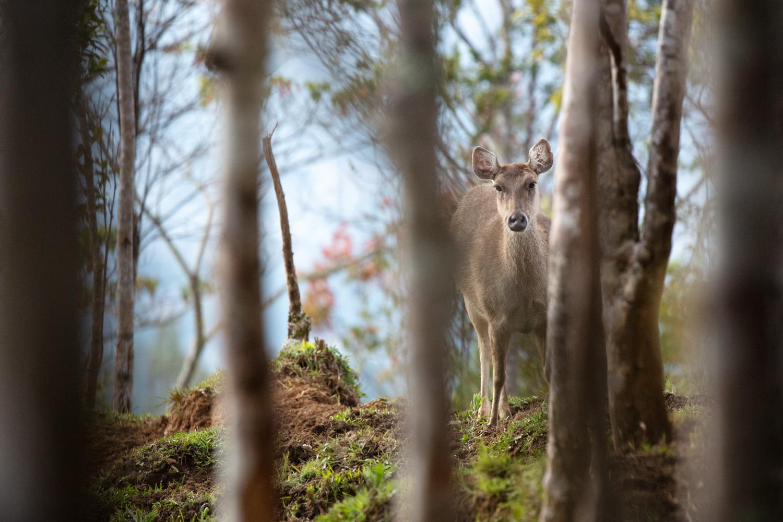https://i0.wp.com/digital-photography-school.com/wp-content/uploads/2019/01/Wildlife-04.jpg?resize=1500%2C1000&ssl=1