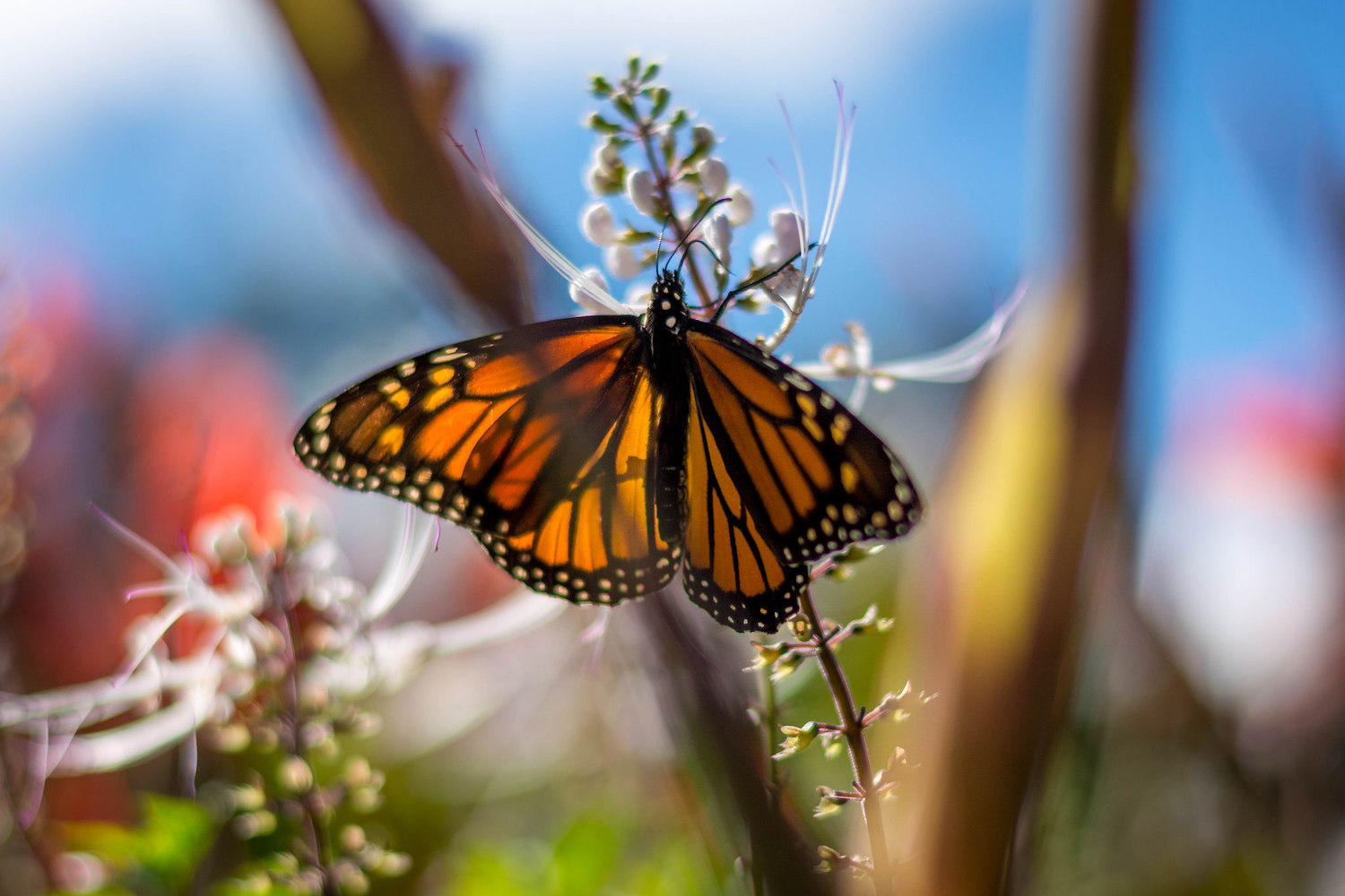 https://i0.wp.com/digital-photography-school.com/wp-content/uploads/2019/02/changing-perspective-butterfly.jpg?resize=1500%2C1000&ssl=1
