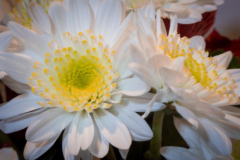 3 - reverse-lens-macro-photography-rick-ohnsman