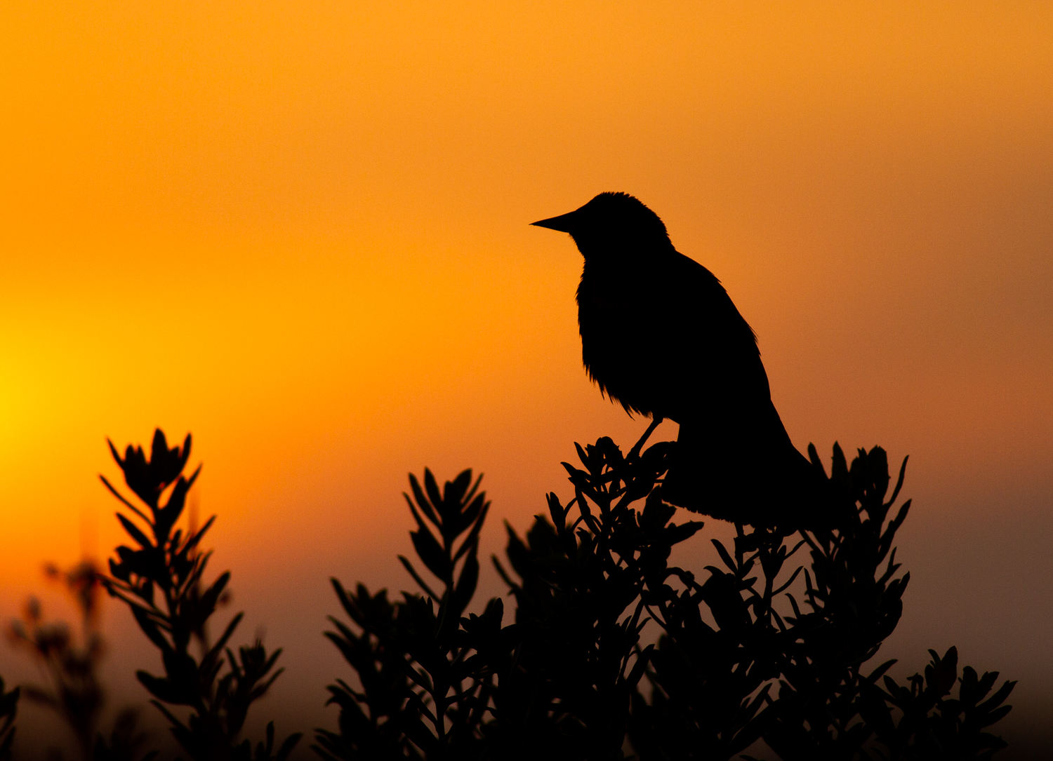 5 Secrets for Stunning Creative Bird Photography