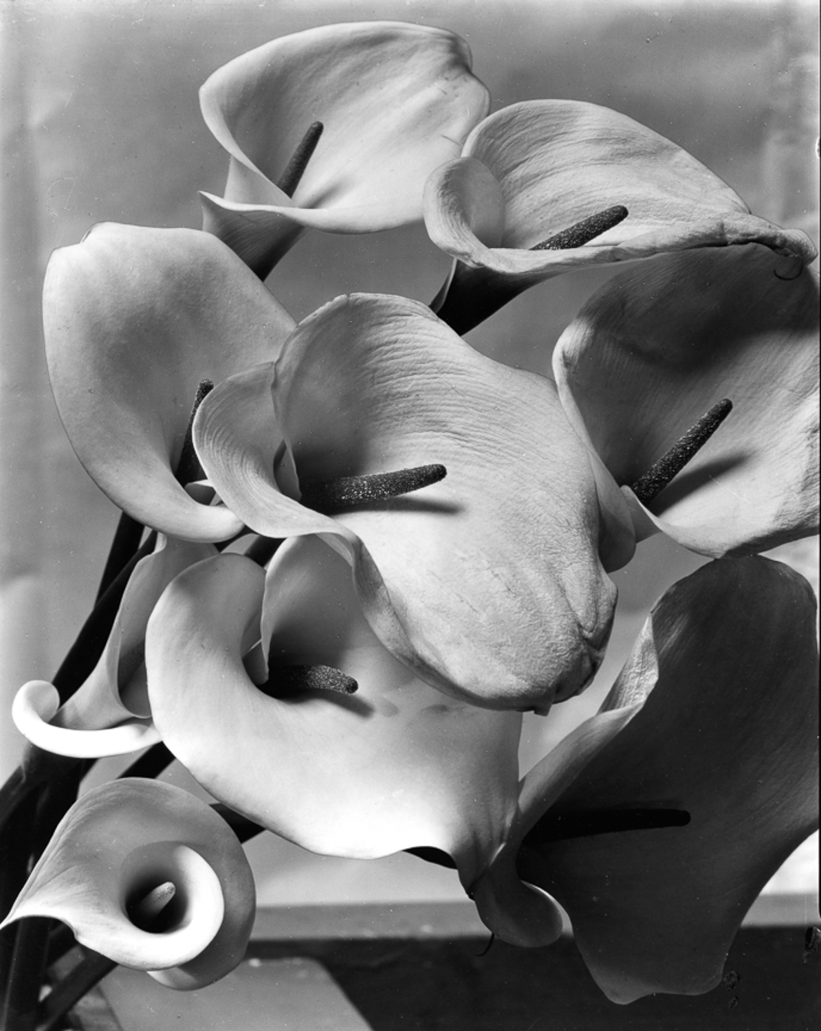 imogen-cunningham-masters-series-digital-photography-school-adam-welch-3