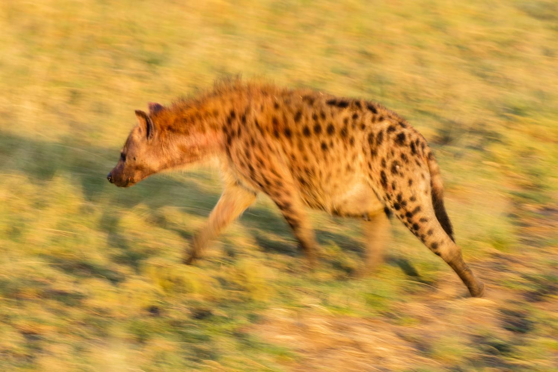 Image: Hyena Pan, Tanzania