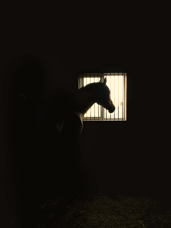Karthika Gupta CulturallyOurs极简主义摄影中的马匹