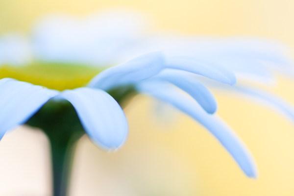 5 Tips for Stunning Macro Photography