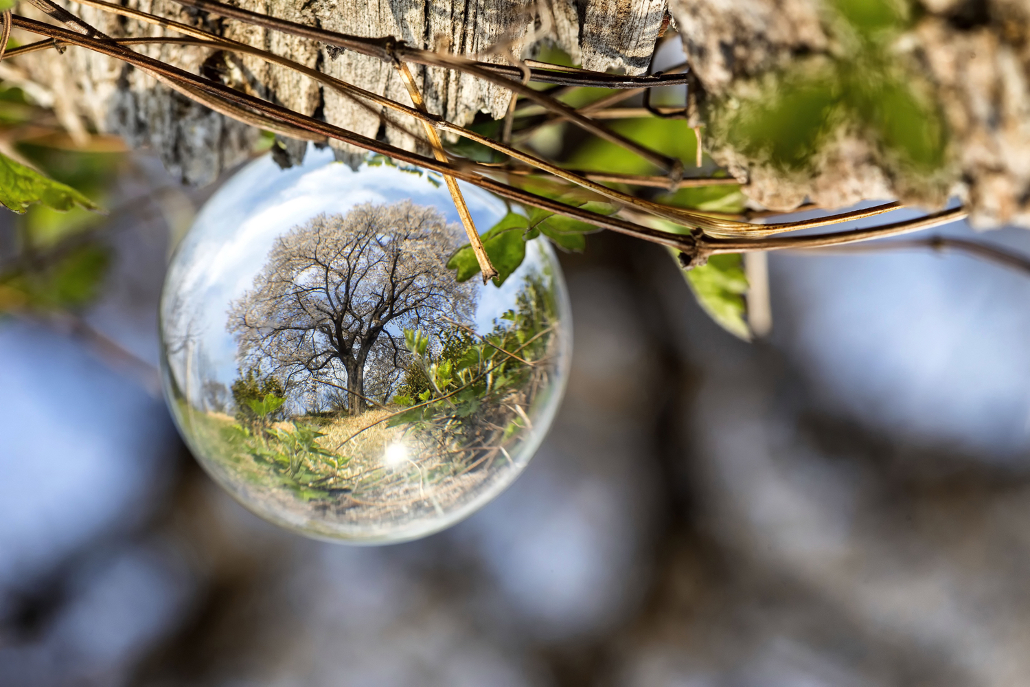 Image: This is a slightly different take on the lone tree photo, and uses a lensball to achieve it.