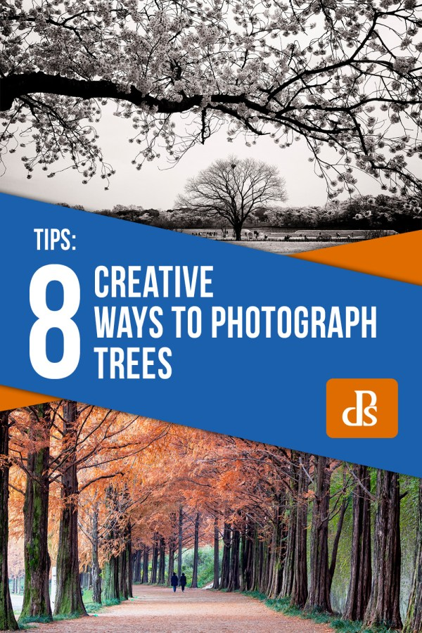 8 Creative Ways to Photograph Trees