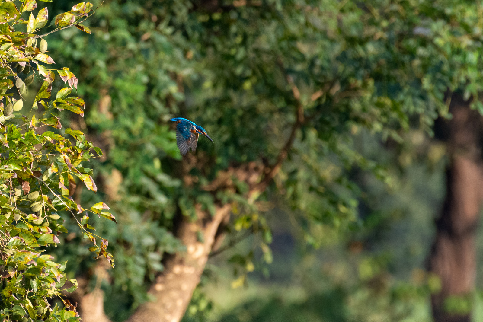 Image: Average focus performance when photographing small objects such as a flying kingfisher at a d...