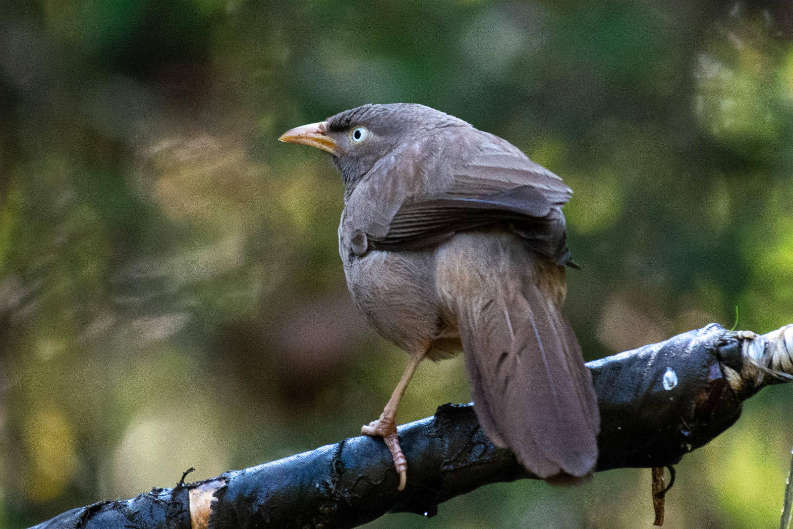 Image: Image of Warbler bird with Vibration Reduction OFF. Feathers are not clearly visible Exif: 50...