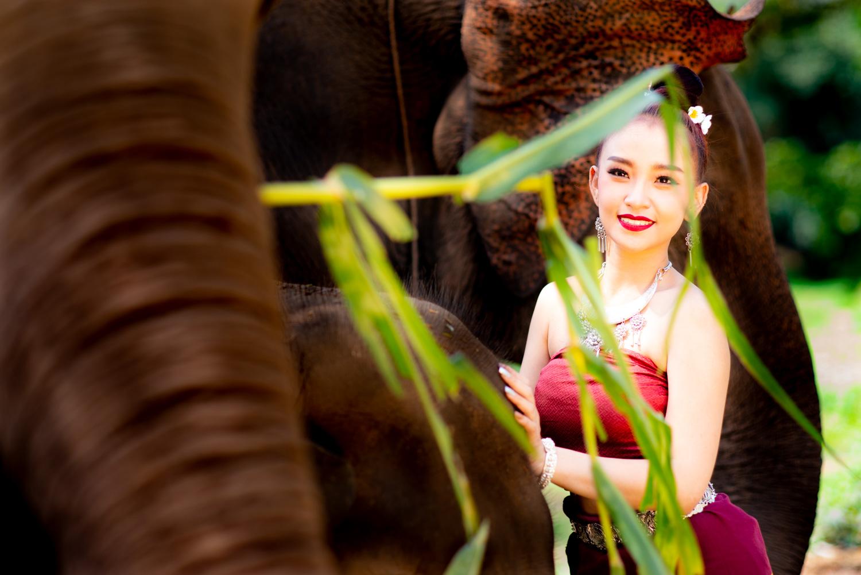 Thai Elephants and Model