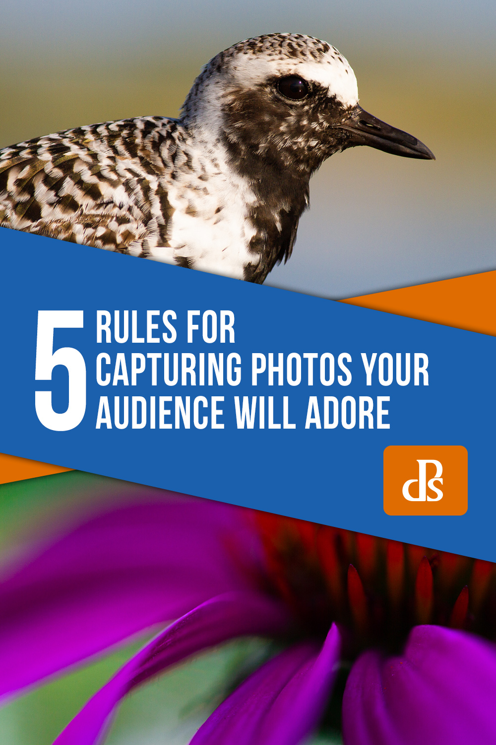 5 photography Rules for Capturing Photos Your Audience Will Adore