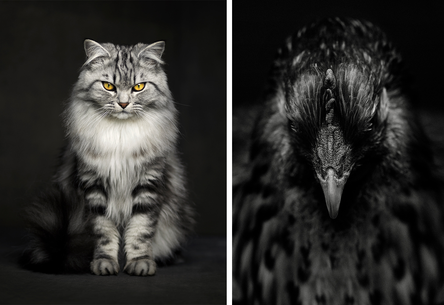 How to Shoot Animal Portraits [video]