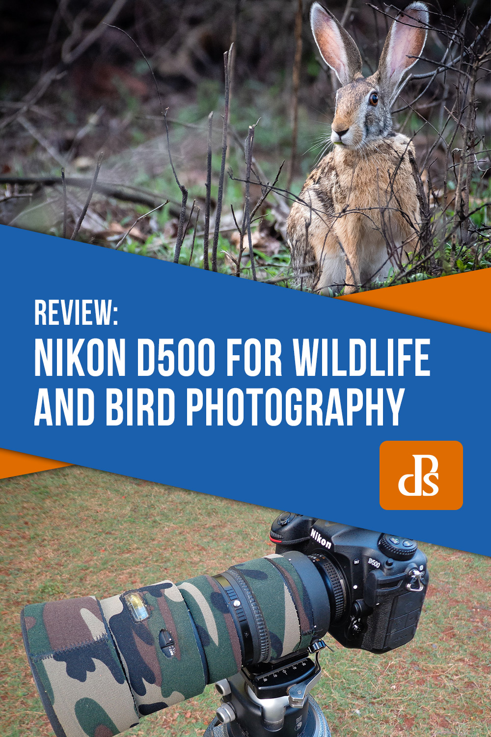 Nikon D500 review for wildlife and bird photography