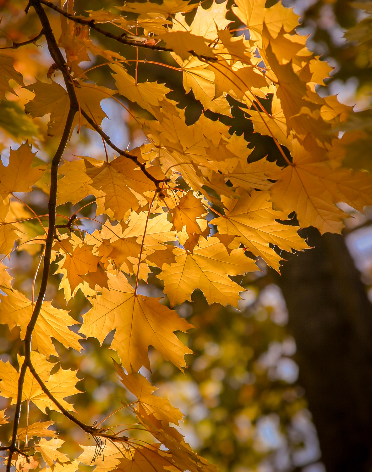 Image: This image is all about the light. The backlit leaves are translucent and pass a portion of t...