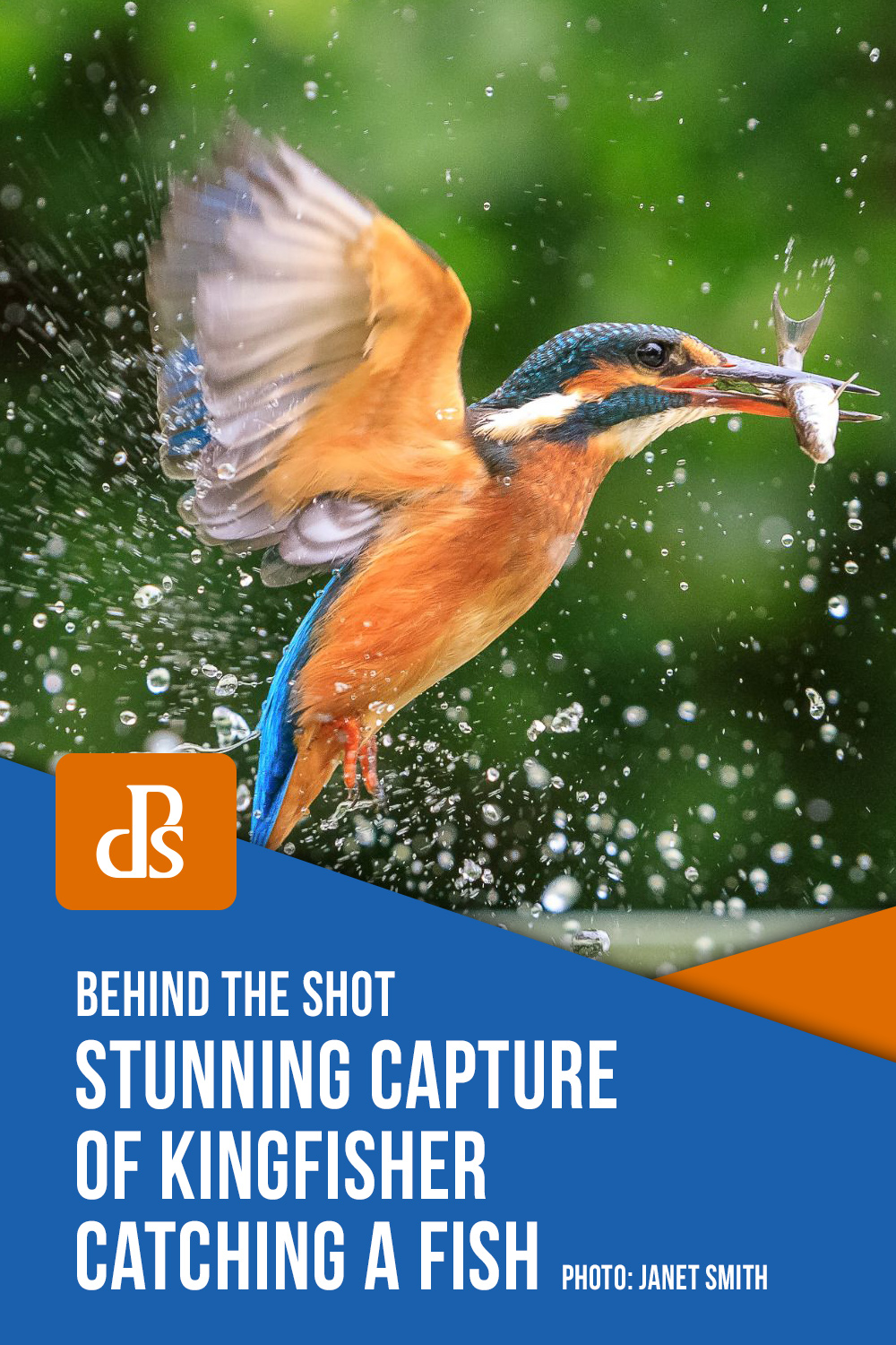 Stunning-Capture-of-Kingfisher-Catching-a-Fish-janet-smith