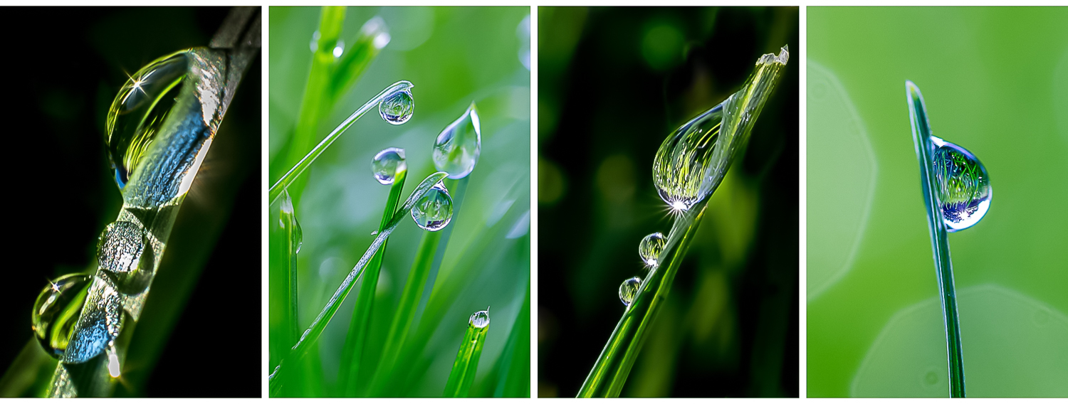 Image: When the morning light hits the dew-covered lawn it can be like searching for diamonds in the...