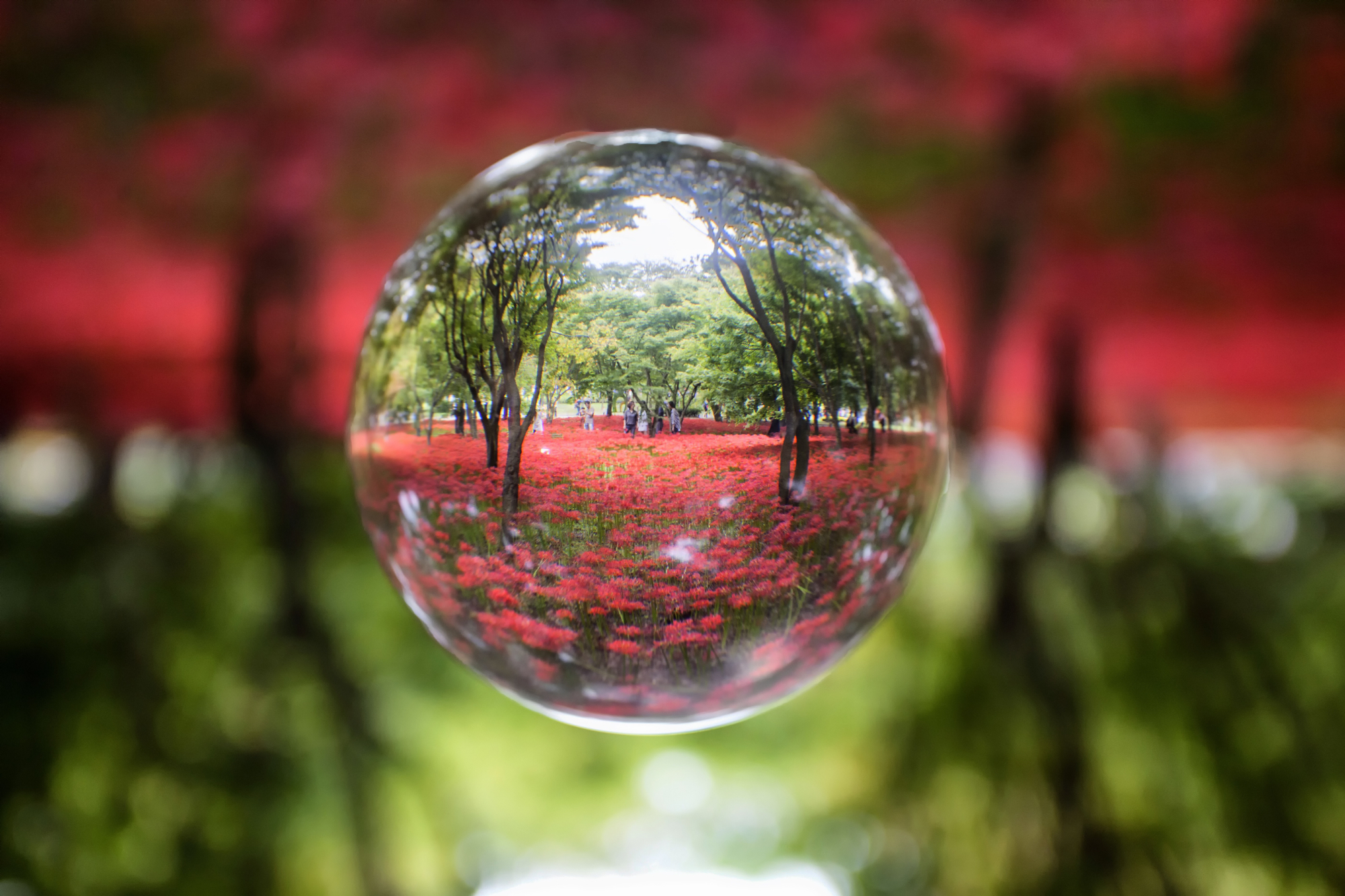 lensball-perspectives