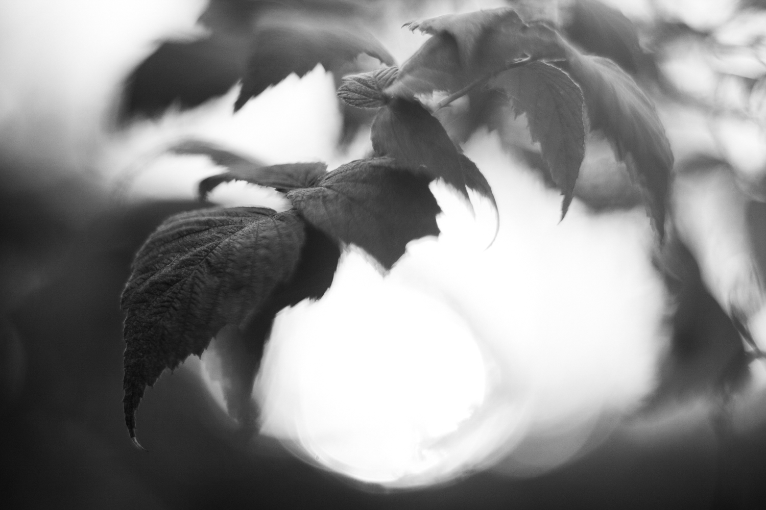 7 Tips for Stunning Black and White Photography (Comprehensive Guide)