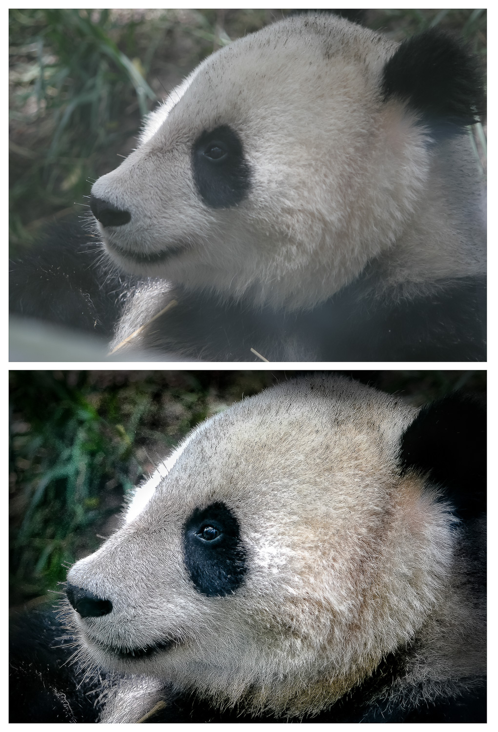 Image: Having to work through the glass, the top image is straight out of the camera. But, with some...