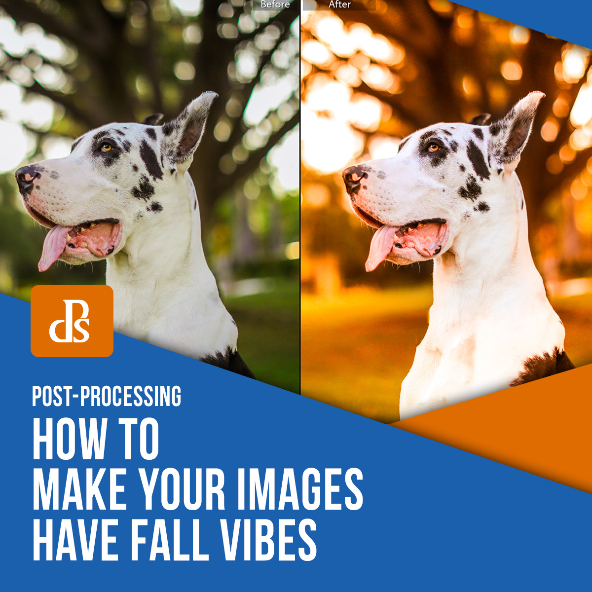 how-to-make-your-images-have-fall-vibes