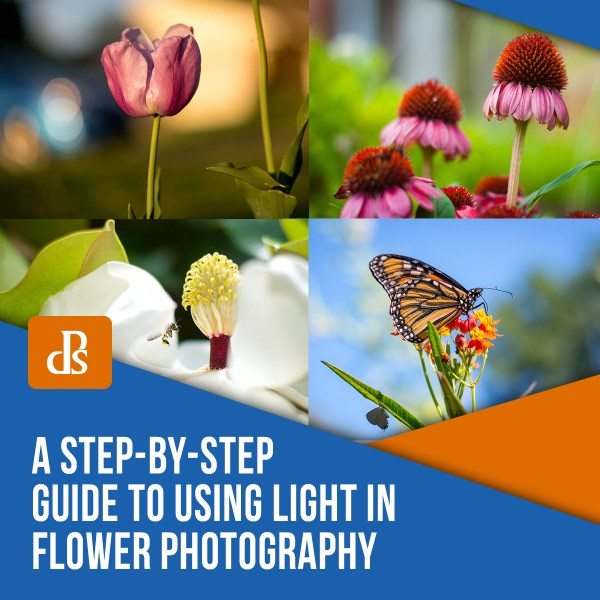 A Step-by-Step Guide to Using Light in Flower Photography for Awesome Photos