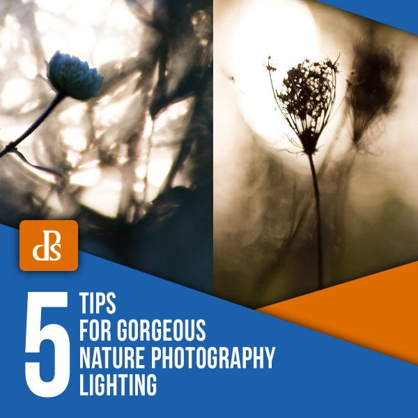 5 Tips for Gorgeous Nature Photography Lighting