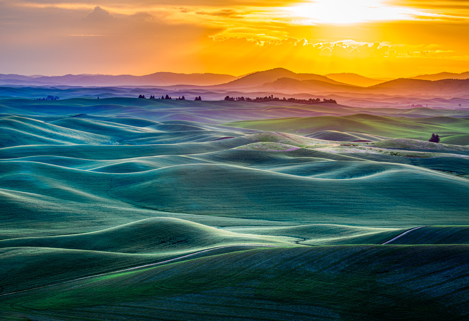 Image: Photographers travel the world to photograph the Palouse country in eastern Washington State....