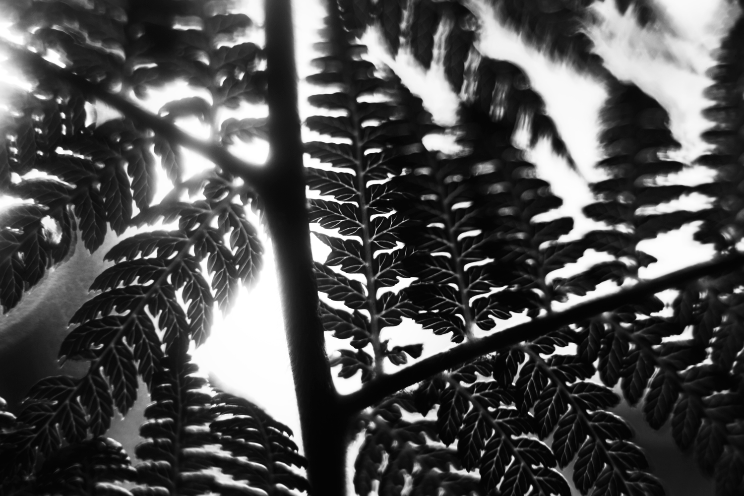 shape-and-form-in-photography-fern_light