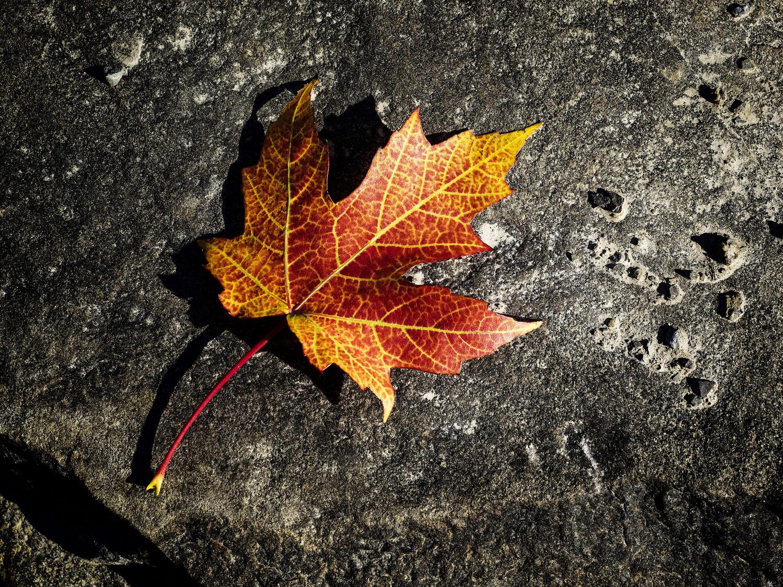 Image: Fall leaf