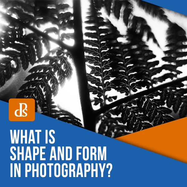 What is Shape and Form in Photography?