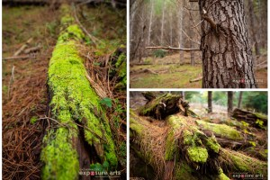Weekly Photography Challenge – Forests