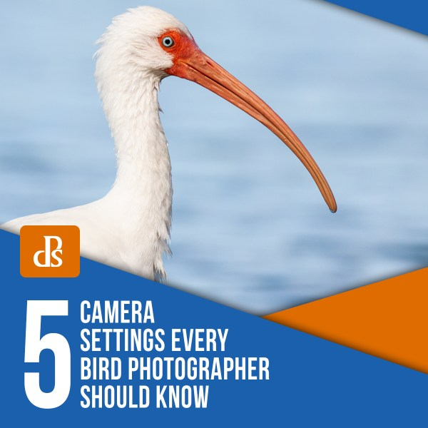 5 Camera Settings Every Bird Photographer Should Know